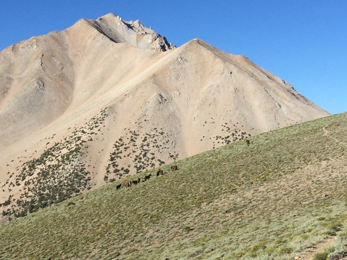 Our first views of Boundary Peak, a little less than a thousand feet above the trailhead... with wild horses!